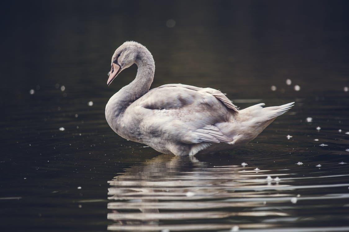 Swan deals in recharacterization