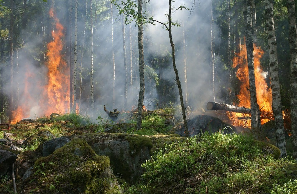 Preventing Forest Fires in Chapter 11